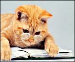 Bibliofile Cat